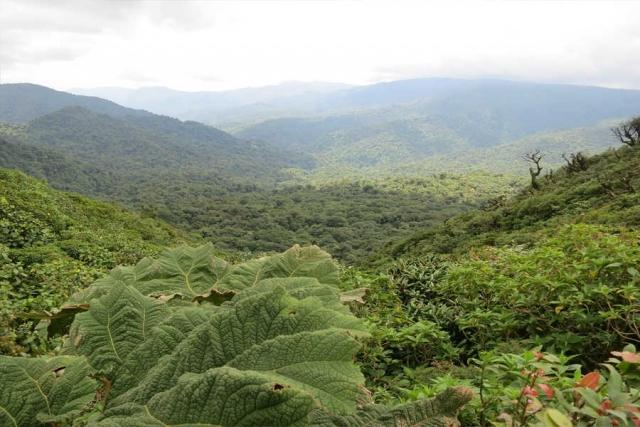 Naturparadies Costa Rica - Rundreise zu den Highlights im Herz von Mittelamerika