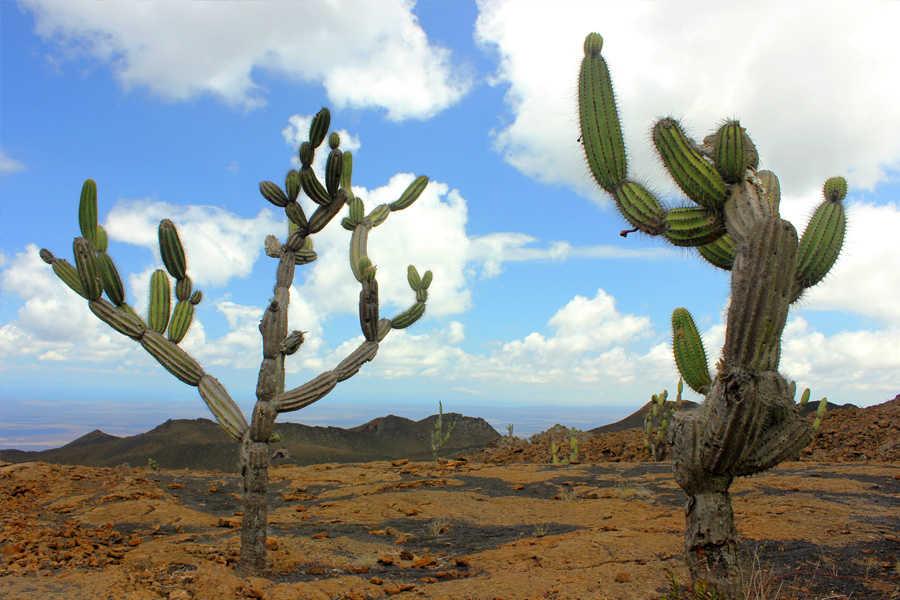 Verlängerungsprogramme zu den Ecuador-Reisen