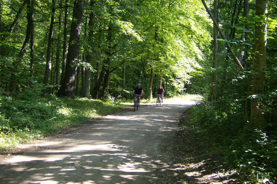 Polen und Weißrussland - individuelle Radreise durch den Białowieża Nationalpark